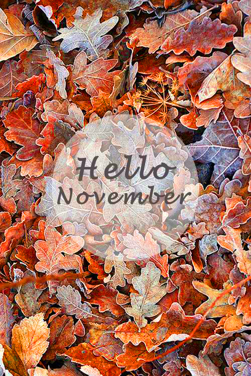 Hello November. Accountability post for my 2015 commitments, aka resolutions.